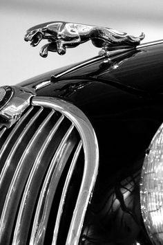 13 Best Jaguar Hood Ornament Ideas Jaguar Hood Ornament Car Hood Ornaments Hood Ornaments