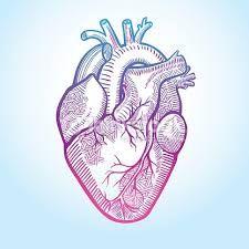 """Résultat de recherche d'images pour """"dessin coeur humain"""""""