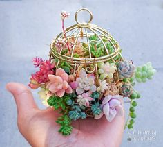 Tiny succulents in mini birdcage.