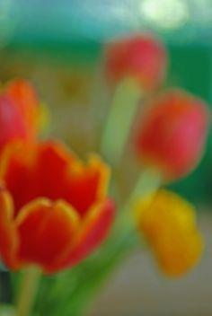 orange tulip and yellow ranunculus no. 2