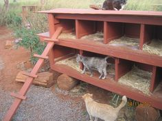 Shelter for outdoor cats Shelter for outdoor cats Feral Cat Shelter, Feral Cat House, Outdoor Cat Shelter, Cat House Diy, Outdoor Cats, Feral Cats, Animal Shelter, Cat Shelters, Outside Cat House