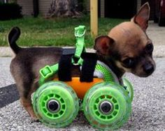 turbo.roo the two-legged chihuahua gets 3D-printed wheelchair. Good technology.