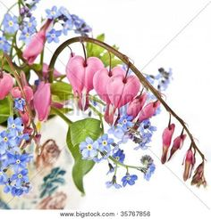 Photo about A bouquet of bleeding hearts and forget me nots in a small pottery vase. Image of pink, bleeding, forget - 25978786 Bleeding Heart Tattoo, Bleeding Heart Flower, Bleeding Hearts, Heart Flower Tattoo, Flower Tattoos, Forget Me Not Tattoo, Flora Flowers, Flower Sleeve, Heart Painting