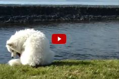 This Dog Tried To Chase His Own Tail, But He Never Saw This Coming! Hilarious!