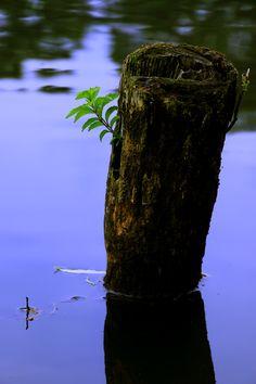 私たちの頭は、環境に慣れる傾向にあって、 慣れた環境の下では、目も曇ってくる。-多湖輝-