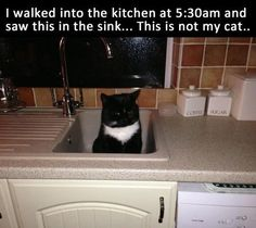 LMAO @ 'NOT my cat' ...It is now, you done got adopted.  btw, kitty is waiting to get fed  ;)