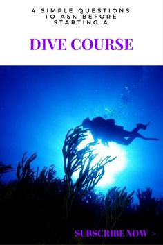 SEAPRO Blog | Wondering if you should Get Your Diver's License on your next Vacation?  Read this post to help make your mind. | Subscribe Now & Get Exclusity! | www.seaprodivers.com
