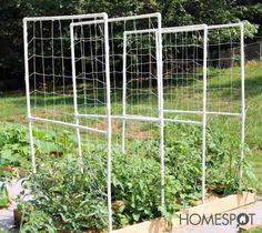 How to build a PVC tomato trellis: 2 x PVC pipe, 2 90 connectors, 2 T connectors, electrical conduit, trellis netting. Thread the trellis over the PVC before glueing; use the optional conduit as ground stakes (or extend the PVC). Tomato Trellis, Cucumber Trellis, Diy Trellis, Tomato Cages, Garden Trellis, Trellis Ideas, Tips For Growing Tomatoes, Growing Tomato Plants, Grow Tomatoes