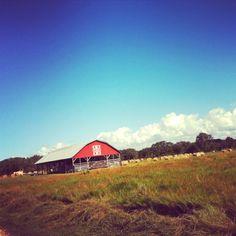 Hay field.