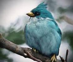 Vogels - Google zoeken
