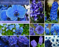 Blue wedding flowers for every season. Wedding Blog, Our Wedding, Blue Wedding Flowers, Wedding Inspiration, Seasons, Weddings, Plants, Blue Flowers For Wedding, Bodas