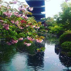 【chobicoco1459】さんのInstagramをピンしています。 《春の京都・東寺#京都#東寺#桜#cherryblossom #kyoto#templeinkyoto#springinkyoto#八重桜#日本の四季#京都シリーズ》