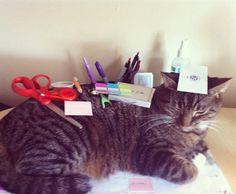 Stationary Cat