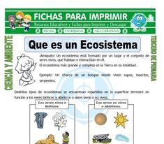 ficha de Que es un Ecosistema para Tercero de Primaria Kid Experiments, Teaching Biology, Science, Montessori, Acting, Homeschool, Activities, Learning, Ideas Para