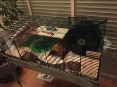Great cage setup for a Syrian Hamster Hamster Habitat, Hamster Ideas, Hamsters, Hamster Stuff, Gerbil, Rodents, Guinea Pig Toys, Guinea Pigs, Rabbits