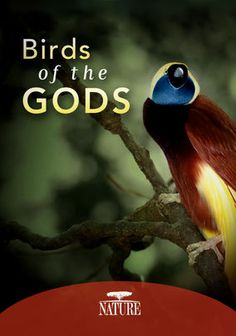 Nature: Birds of the Gods - use for zoology 1 homeschooling with Netflix