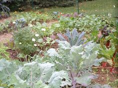 Plant a Fall Garden (Autumn) Small Vegetable Gardens, Backyard Vegetable Gardens, Vegetable Garden Design, Raised Garden Beds, Raised Beds, Growing Veggies, Organic Gardening Tips, Spring Sign, Planting Bulbs
