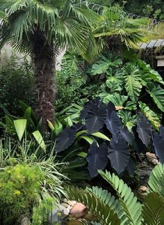 Tropical Pool Landscaping, Palm Trees Landscaping, Tropical Garden Design, Tropical Backyard, Tropical Plants, Garden Landscaping, Bali Garden, Balinese Garden, Indian Garden