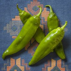 New Mexico 6-4 is one of the most popular Mild varieties being produced today. Developed by Roy Harper and released in the 1960's.  Pod size ranges from 6 to 8 inches in length to 2 inches in width.
