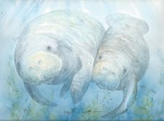 PRINT 8 x 10 manatee calf bowman open edition by happypaints