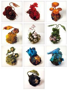 Image result for amy moss lichen