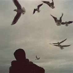 seagulls by the69th, via Flickr