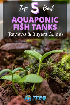 Best Aquaponic Fish Tank: There are some really great aquaponic tanks out on the market today, and we've handpicked our top 5 favorites to show you. Our reviews on those are coming up very shortly.Please note, this article concentrates on aquaponic fish tanks for fun and decoration and not on growing fish to eat them.Following that, we've then got a buying guide for you, highlighting some of the key things you might want to think about before you buy your aquaponic tank.
