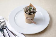 Succulents as a wedding favor, perfect for a rustic wedding