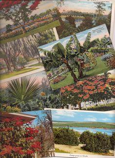 Florida Foliage Old Postcards