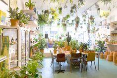 Un blog para fans de las plantas  .
