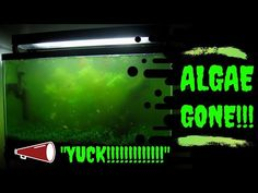 How to Get Rid of Algae in your Fish Tank. Here is how to remove and prevent algae to proliferate in your aquarium.