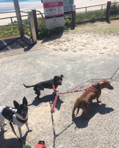 Today captain banshee and little ivy had a group walk exploring Currumbin beach