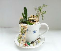 A Miniature Garden in a teacup! <3