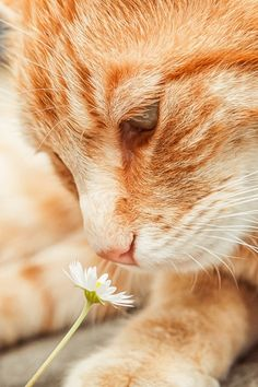 orange cat ♥ This reminds me of my dear, sweet Cinnamon cat. I miss you Cinny!
