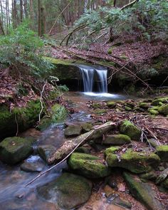 """Sam Calhoun on Instagram: """"A small twin falls in Bankhead National Forest, AL.  #waterfalls #visitnorthal #explore #getoutstayout  #optoutside #getoutide #travel…"""""""