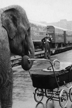Elefante e o bebê
