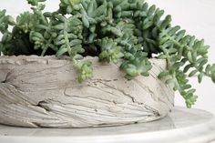 Concrete planter made in a round plastic tupperware mold lined with palm fronds