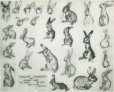 rabbits for Bambi