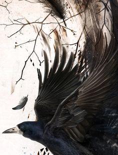 "Raven By "" Paweł Kozakowski "" – Drawing Inspiration Crow Art, Raven Art, Bird Art, Raven And Wolf, Quoth The Raven, Art And Illustration, Blackbird Singing, Jackdaw, Raven Tattoo"