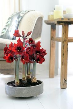 huis, tuin en keuken planten