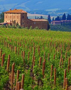 Wine Tasting at Tuscany's Best Wineries - Condé Nast Traveler - Pictured is Castello Bianfi Elba, Monuments, Siena Toscana, Brunello Di Montalcino, Montalcino Italy, Wine Vineyards, Under The Tuscan Sun, In Vino Veritas, Italian Wine