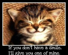 smile quotes positive quotes quote cat happy smile kitten cut @Michele Rogers
