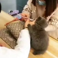 Cute Cat Gif, Cute Funny Animals, Cute Baby Animals, Animals And Pets, Cute Cats, Funny Cats, I Love Cats, Crazy Cats, Kittens Cutest