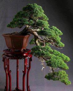 Art Bonsai Tree