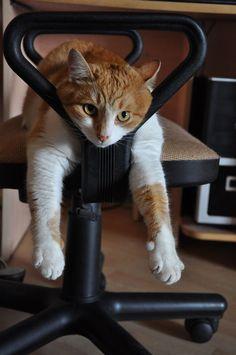 """""""God.. I love this chair….ahhhh…."""""""