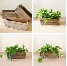 Vintage Wood Crate Planters on Wall Create a wall Garden outside or Inside Wooden Planters, Vintage Planters, Planter Boxes, Wall Planters, Vintage Wood Crates, Wooden Crates, Wine Crates, Shipping Crates, Pallets Garden
