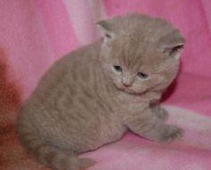 Teddy as a kitten.