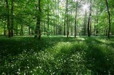 Lush, green, forest