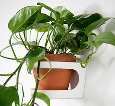 Gröna väggen - hållare för krukor - växter - nordisk design - grön miljö