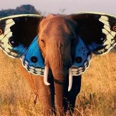elephant with butterfly wings as ears. I would rock this as a tattoo. @Anna Helgadottir brumfield